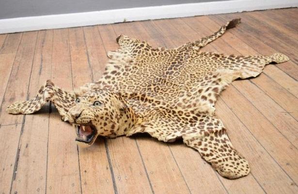 Прокуратура Анапы против реализации шкур леопарда и прочих животных