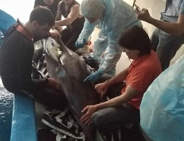 Анапчане возмущены браконьерской ловлей дельфинов в море
