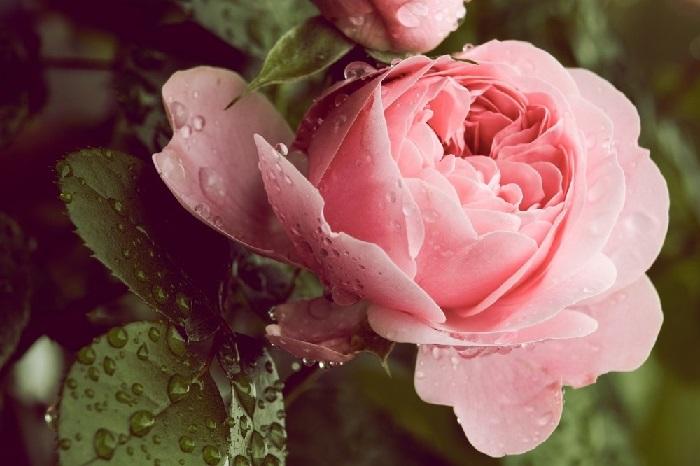 Погода в Анапе на 22.08.2019 г. - Возможен дождь